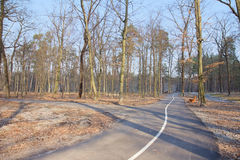 Fall in forest - park road in Bucha, Ukraine Royalty Free Stock Images