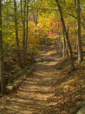 Fall Forest Path Stock Images