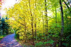 Fall forest path. Beautiful fall path to the forest with colorful trees on each side royalty free stock photography