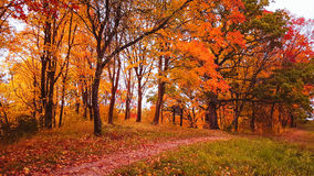 Fall forest and path Royalty Free Stock Image