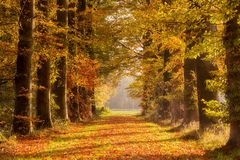 Fall forest path Autumn leaves. Forest path covered with fallen leaves during Autumn Stock Photo