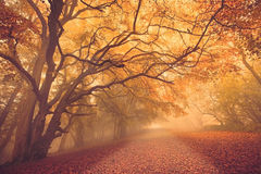 Fall forest path. Beautiful misty golden light Fall path through forest