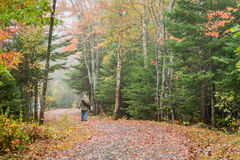 Fall Forest Path Stock Photography
