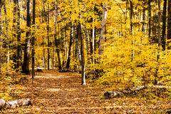 Fall forest path. Fall forest, path of yellow and brown leaves Stock Photography