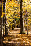 Fall forest path. Royalty Free Stock Photo