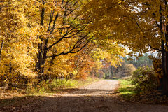 Fall forest path. Stock Image