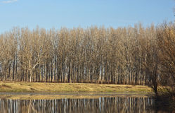Fall Forest Reflected on Lake Stock Image