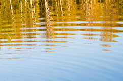 Fall forest reflection Royalty Free Stock Images