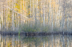 Fall forest reflection Stock Photo