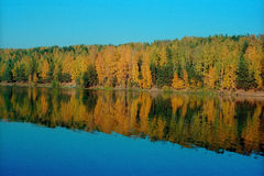 Fall forest reflection Royalty Free Stock Photo