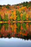 Fall forest reflections Royalty Free Stock Image