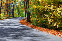 Fall forest road Stock Image