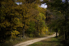 Fall Forest Road Royalty Free Stock Photo
