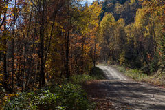 Fall forest road, Canada. Fall forest road Stock Images