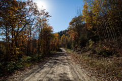 Fall forest road, Canada. Fall forest road Royalty Free Stock Photography