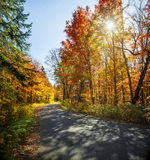 Fall forest road Royalty Free Stock Photography