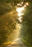 Fall forest road with rays of the rising sun Stock Photography