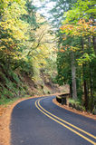 Fall Forest Road Royalty Free Stock Image