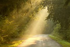 Fall Forest Road With Rays Of The Rising Sun Stock Image