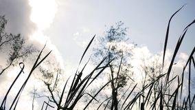 Fall Forest Series - Tips of cattails swaying in the wind stock video footage