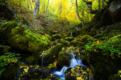 Fall forest stream Royalty Free Stock Photo