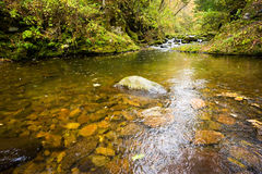 Fall forest stream Elomovsky in russian primorye Royalty Free Stock Photo