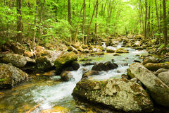 Fall forest stream in russian primorye Royalty Free Stock Image