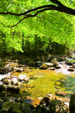 Fall forest stream Smolny in russian primorye Stock Photo
