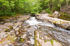 Fall forest stream Smolny in russian primorye reserve royalty free stock photography