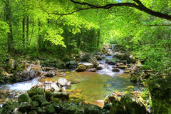Fall forest stream Smolny in russian primorye reserve Royalty Free Stock Photo