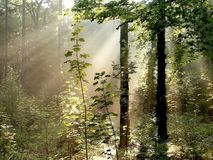 Fall forest with sun rays through the trees