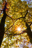 Fall in forest Royalty Free Stock Photography