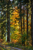 Fall Forest Trail Stock Images