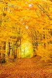 Fall forest trails forking Royalty Free Stock Photo