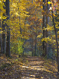 Fall Forest Walk. A sunny fall day in the woods royalty free stock images