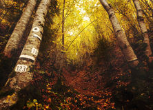 Fall forest wallpaper Stock Photos