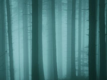 Fall forrest melancholy. Foggy forrest in the fall melancholy Stock Images