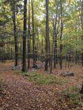 Fall Forrest Royalty Free Stock Photos