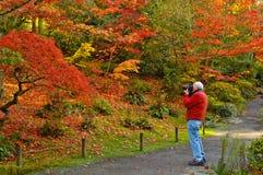 Fall-Fotographie und Fotograf Stockfotografie