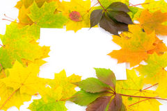 Fall frame Royalty Free Stock Photos