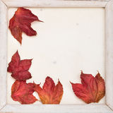Fall frame Stock Photo