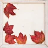 Fall frame Stock Photo