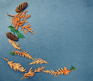 Fall frame, cones, cedar, arborvitae. Closeup still life of cedar, arborvitae leaf branch and pine cones. Autumn, Fall concept. Grungy frame, background with Royalty Free Stock Photos