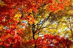 A Fall Frame of Fiery Colored Trees Stock Photos