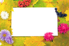 Fall Frame With Flowers And Berries Stock Photo
