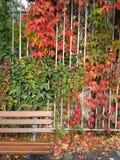 Fall in Frankfurt Stockfotos