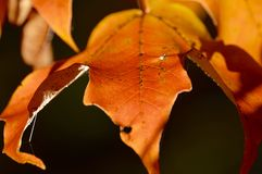 Fall frolic Royalty Free Stock Images