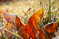 Fall frost on leaves Royalty Free Stock Photography