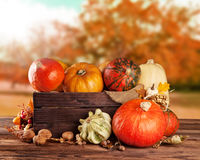 Fall fruit and vegetables on wood. Thanksgiving. Fall fruit and vegetables in wooden box. Thanksgiving concept of harvested food Royalty Free Stock Photography