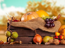 Fall fruit and vegetables on wood. Thanksgiving. Fall fruit and vegetables in wooden box. Thanksgiving concept of harvested food Royalty Free Stock Image